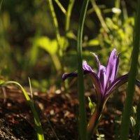Цветок :: Мила Борисова