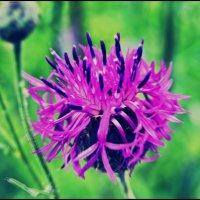 flower :: Valeri Murtova