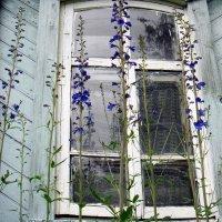 Деревенское окно. :: Елизавета Успенская