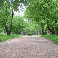 сады в Коломенском :: o'k Ovk