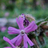 Лесные цветы :: Леонид Соболев