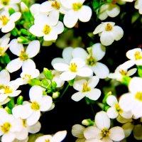 цветы :: Ник Macen