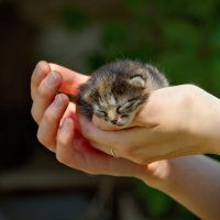 Котёнок :: Арсений Корицкий