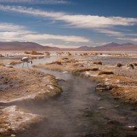 Фламинго на горячем источнике в Перу :: сергей агаев