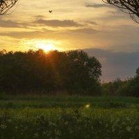 на закате! :: ольга кривашеева
