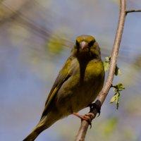 Очень строгая птица. :: Ekaterina Spirina