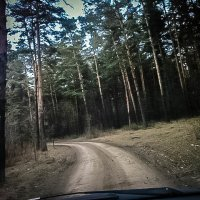 Лес :: Никита Пономарев