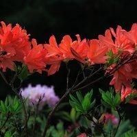 Волшебный цветок ! :: Николай Кондаков