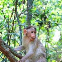 Житель национального парка в Индии :: Анна Мигачева