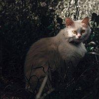 Жила была кошка..... :: Виктор