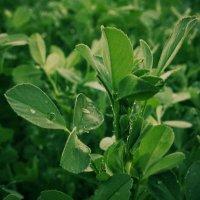 [green] :: Alsu RX