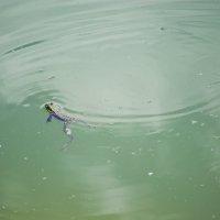 на озере :: Екатерина Тимашева