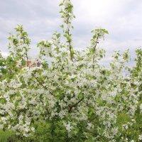 в Казань пришла весна :: Ильмира Хафизова