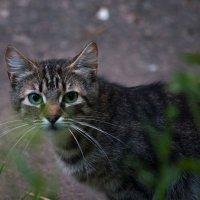 Общительный котик :: Владимир Кроливец