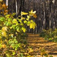 По следам желтых листьев :: Ольга Винницкая (Olenka)