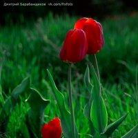 цветочная семья :: Дмитрий Барабанщиков