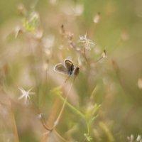 бабочка :: Александр Черный