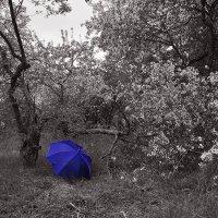 Бессмертие синего зонта... :: Сергей Коновалов