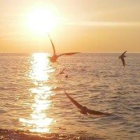 Заход солнца на Балтийском море :: Nikita Lev