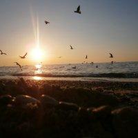 Просто красиво... :: Nikita Lev