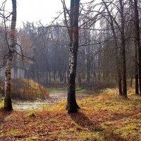 Из осеннего :: Yuriy V