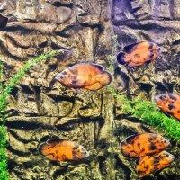 рыбы и камни :: pavel belov