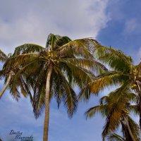 кокосы :: Дмитрий Иванов