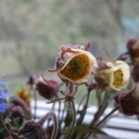цветы :: cvety_zla ///