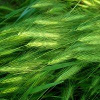 Трава  в мае :: Татьяна Пальчикова
