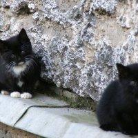 Котята :: Наталия Короткова