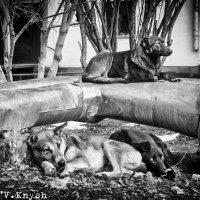 Просто от жизни, от жизни собачьей :: Vlada Knysh