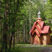 Среди лесов :: Анатолий Тимофеев