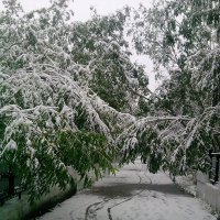 Зима нечаянно настала :: Евгения Глебова