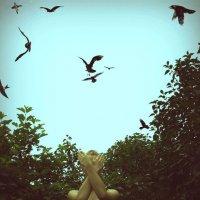 Birds :: Юлия Кутовая