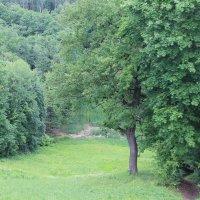 дорога в лес :: Анна Круглова
