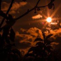 Ловец солнца :: Мария Арбузова