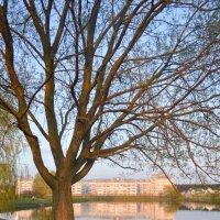 Дерево на пруду :: Анастасия Радыно