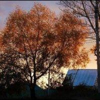 Sunset :: Valeri Murtova