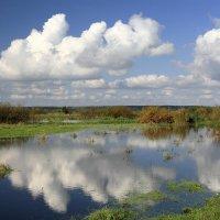 Плывут по лугу облака :: Сергей Михайлович