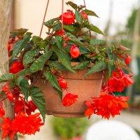 Соседские цветы :: Aнатолий Бурденюк