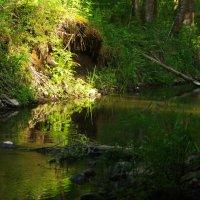 Речка в лесу 1 :: Александр Викторенков