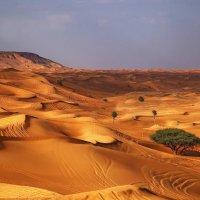 Вечерело в пустыне Руб-эль-Хали...(ОАЭ). :: Александр Вивчарик