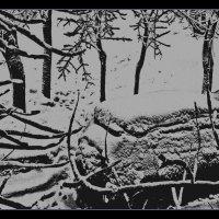 Зима 2013. :: Виталий Виницкий