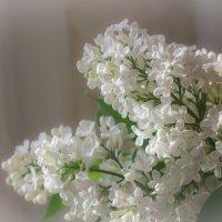 Весна***** :: Евгений Пятов
