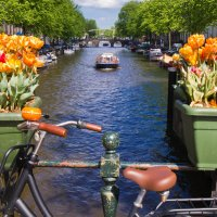 Тюльпаны на каналах Амстердама :: Petr Milen