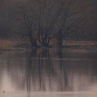 пейзаж с  утками :: Дмитрий Потапов