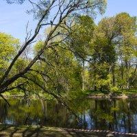 Весенний парк :: Лариса Лунёва