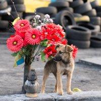 Майдан, Киев. июнь 2014 :: Ирина Кеннинг
