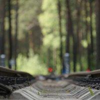 детская железная дорога :: Михаил Фролов