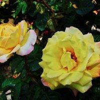 дарю цветы :: Валерий Дворников